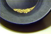 Gold-Pan-2.jpg